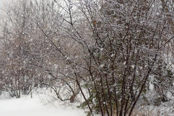 Averse de neige 1080