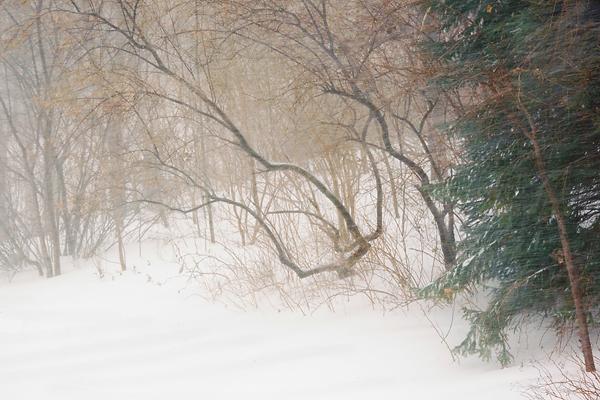 Scène hivernale