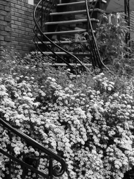 Images de Rosemont 5 - Escaliers