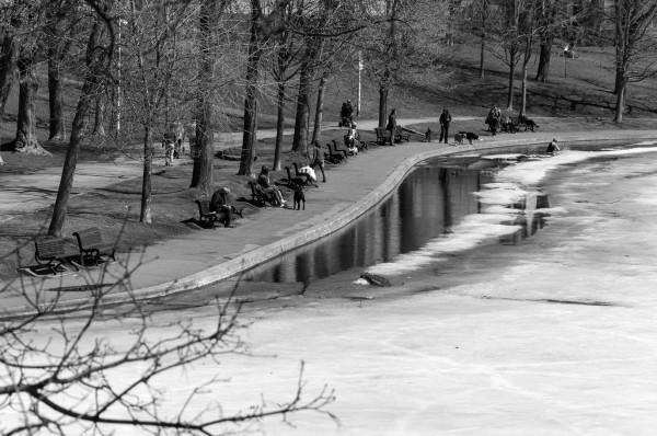 Le début du printemps au Parc Lafontaine nb