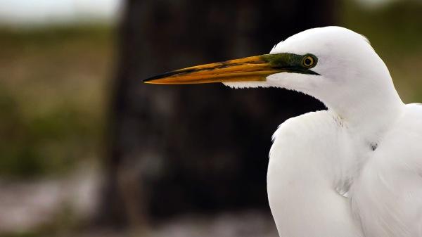 Des oiseaux agressifs