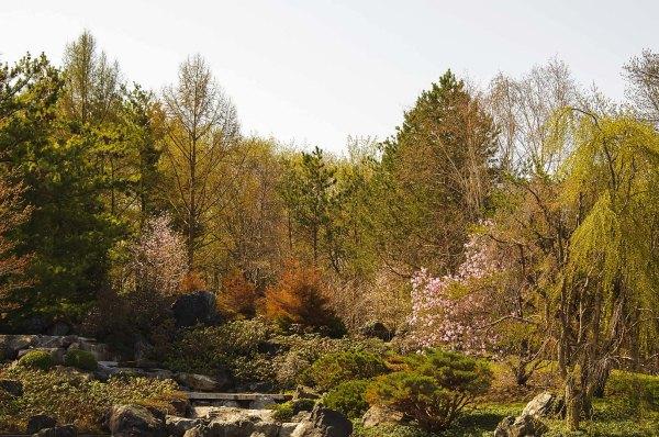 Le printemps au jardin japonais