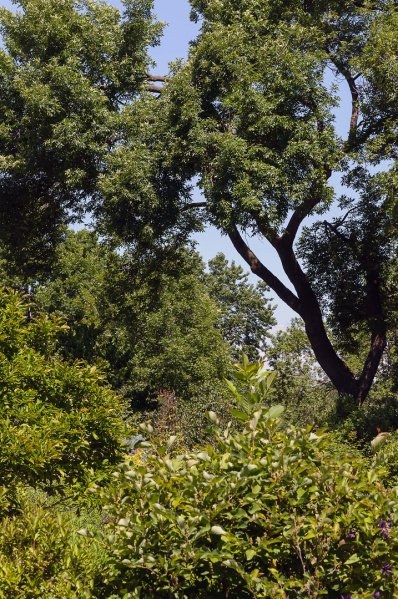 Jardin botanique de Montrréal - 20 juin 2014