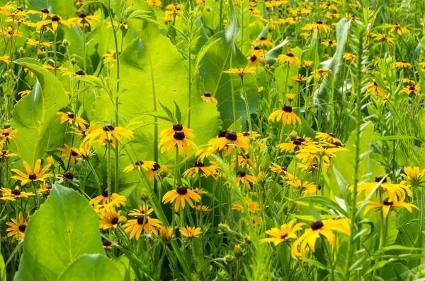 Jardin botanique du Niagara - 25 juin 2015