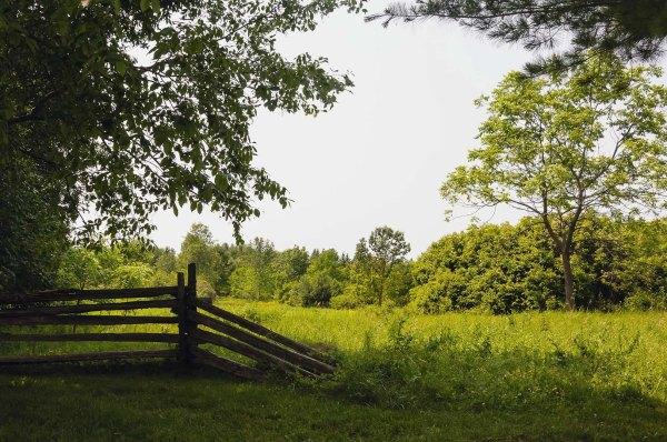 Arboretum de l'Université de Guelph, Ontario - 4 juillet 2015