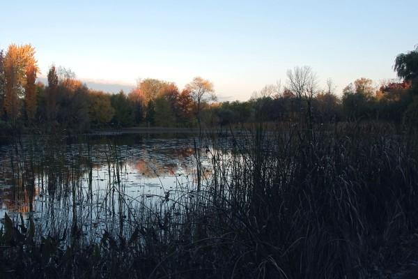 Aube sur l'étang du Jardin botanique