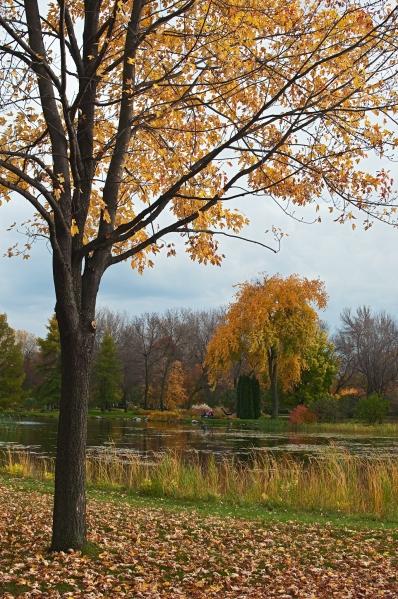 L'automne au Jardin botanique 21