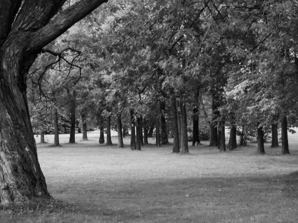 Parc Maisonneuve - Arbres