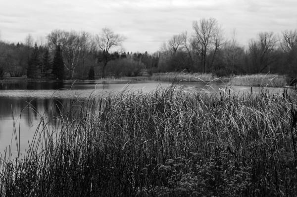 L'étang du Jardin botanique de Montréal