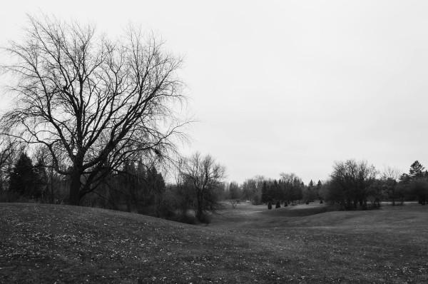 Le paysage domestiqué du Parc Maisonneuve dans l'est de Montréal