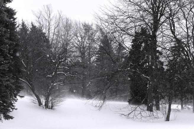 Coup de vent - Parc Maisonneuve - format écran