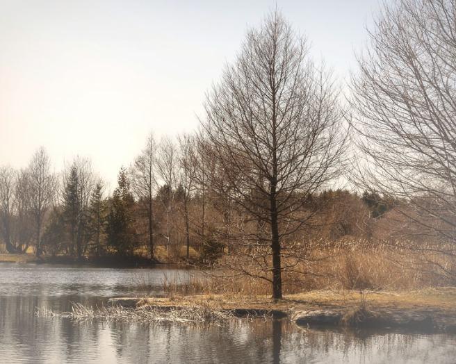 Printemps sur l'étang