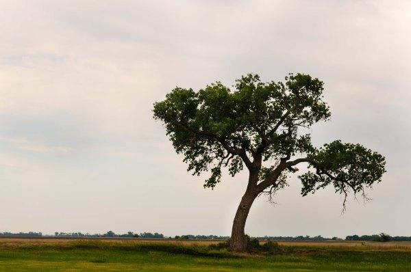 Kansas - Un arbre