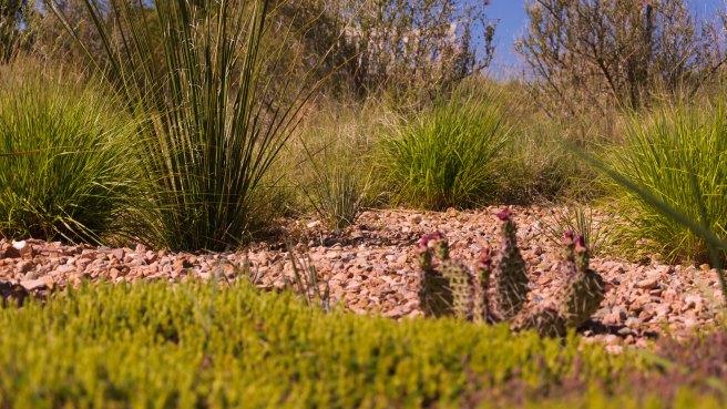 Santa Fe - Un coin du jardin botanique 2