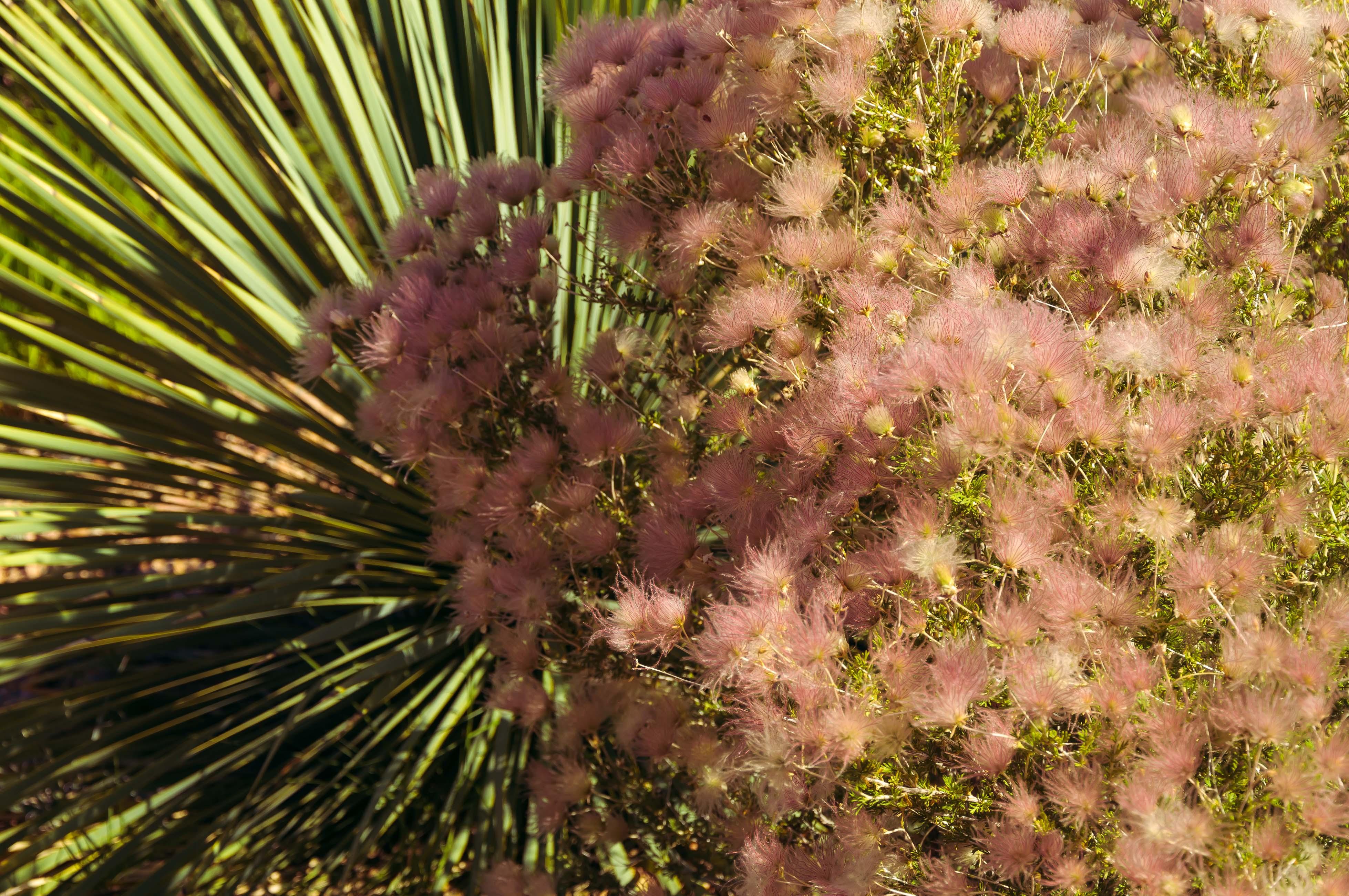 Santa Fe - Un coin du jardin botanique 3