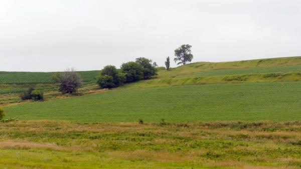 paysage-vertde-liowa