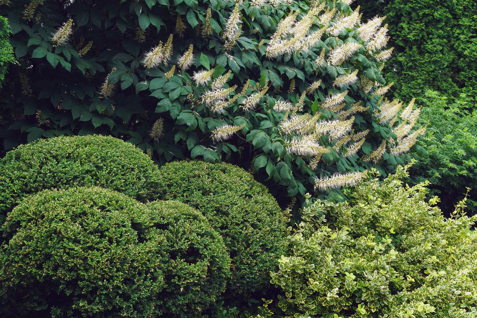 Promenades au jardin en juillet sillage for Jardin jardin 2017